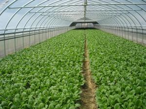 農林業の育成・振興にむけて積極的に支援します