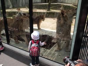 ライオンはお友達。