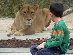ライオンがそこにいます。
